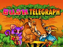 Игровой автомат Bush Telegraph